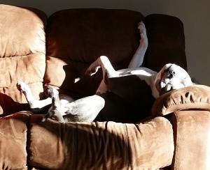 relaxed sunbath